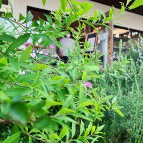 緑生い茂る雑貨屋さんの風景