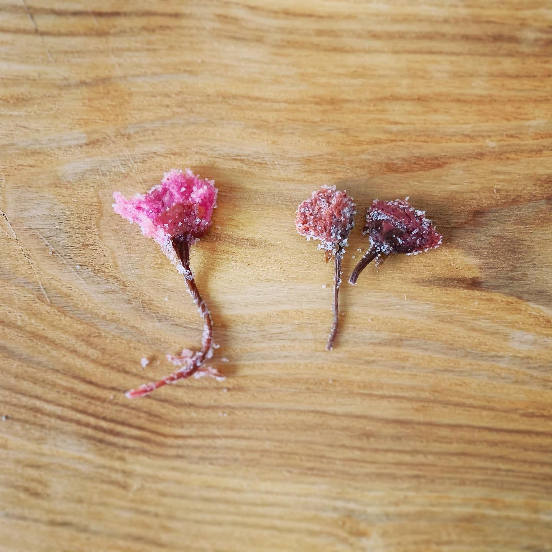 桜の花びらの塩漬け比較・左が富澤商店の桜花の塩漬け・右が山眞産業の桜花塩漬